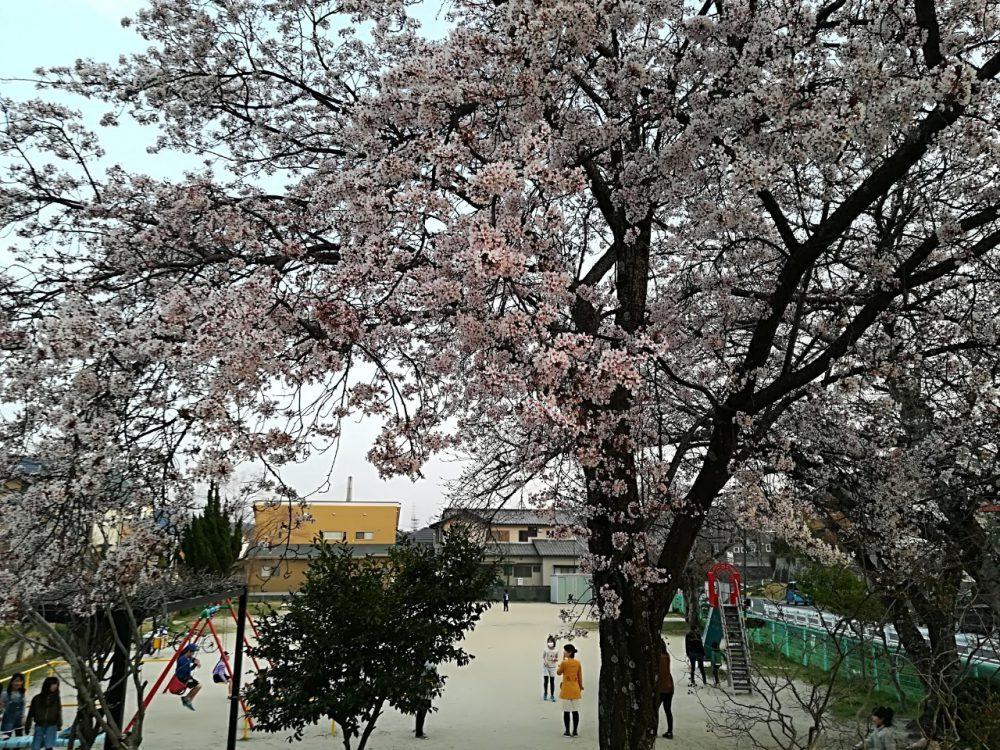 """桜もきれいな公園情報 豊田市水源町""""水源3丁目ちびっこ広場"""""""